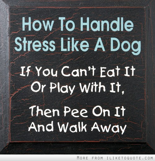 How to handle stress like a dog. If you can't eat it or play with it, then pee on it and walk away.