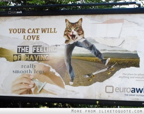 Your cat will love the feeling of having really smooth legs.