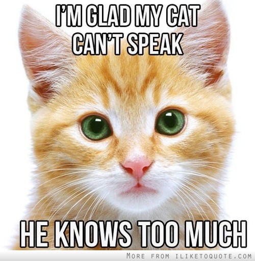 I'm glad my cat can't speak. He knows too much.