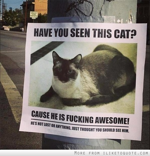 Have you seen this cat? Cause he is fucking awesome! He's not lost or anything. Just thought you should see him.