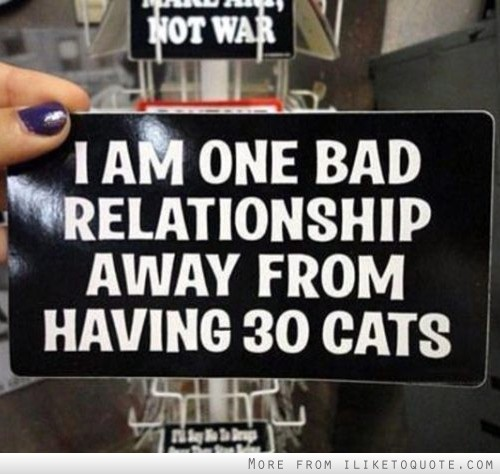 Quotes About Being In A Bad Relationship: I Am One Bad Relationship Away From Having 30 Cats