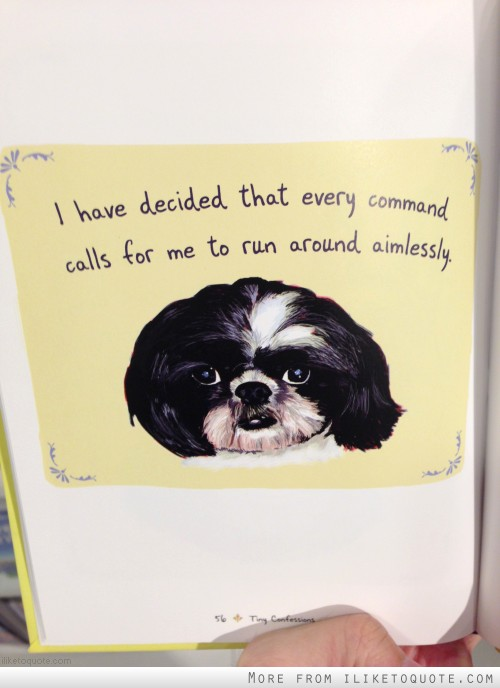 I have decided that every command calls for me to run around aimlessly.