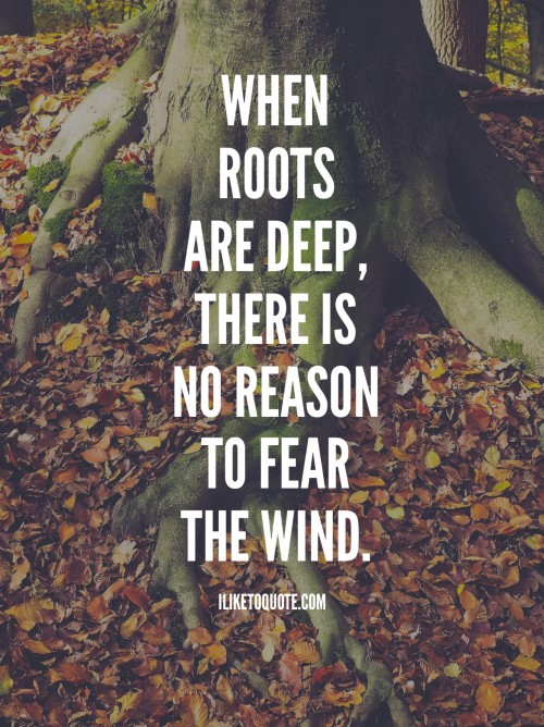 When roots are deep, there is no reason to fear the wind.