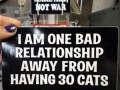 I am one bad relationship away from having 30 cats.