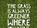 The grass is always greener where you water it.