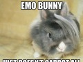 Emo bunny just doesn't carrot all